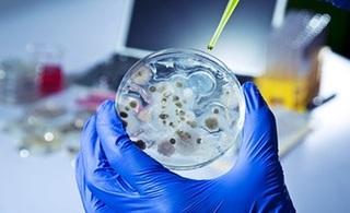 WHO ostrzega: 12 najgroźniejszych bakterii opornych na antybiotyki