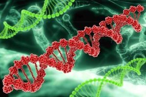 Fenyloketonuria – genetyczna choroba metaboliczna