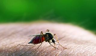 25 kwietnia Światowy Dzień Walki z Malarią.