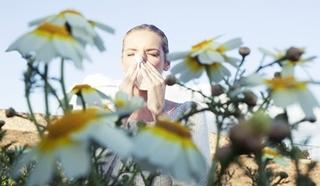 Kalendarz pylenia - ogromne wsparcie przy alergii