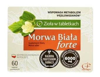 Morwa Biała Forte