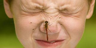 Najlepsze produkty na ukąszenia owadów